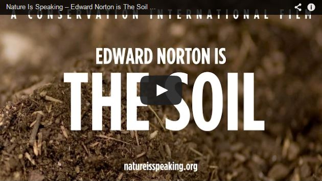 edward-norton-the-soil
